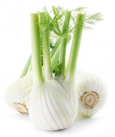 Florence fennel bulbs.