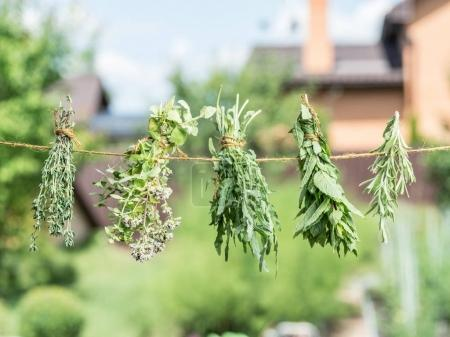 Bundles of flavoured herbs drying on the open air. Nature backgr