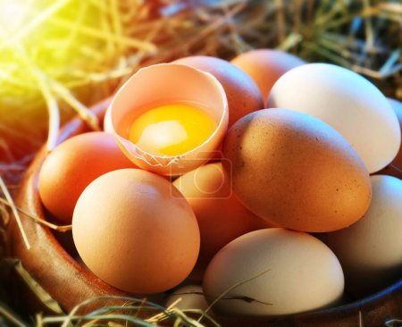 Photo for Chicken eggs in the straw with half a broken egg in the morning light. - Royalty Free Image
