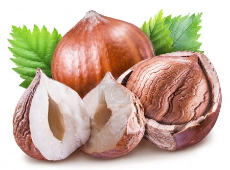 Hazelnuts, kernel of hazelnut and green leaves. Clipping path.