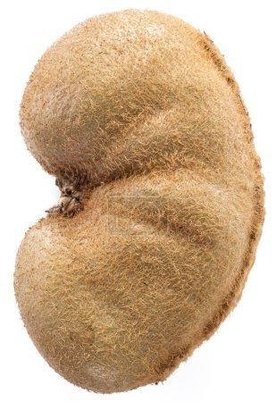 Kidney like kiwifruit. Isolated on a white background.