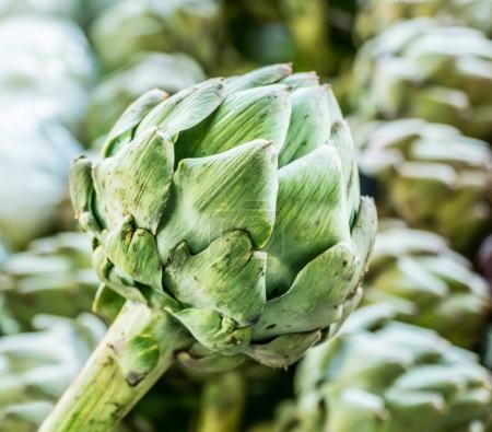 Artichoke flowers. One artichoke flower close-up.