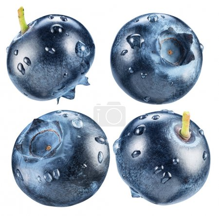 Four blueberries with water drops. Macro shot. Clipping path.
