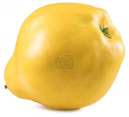 Apple-quince. File contains clipping path.