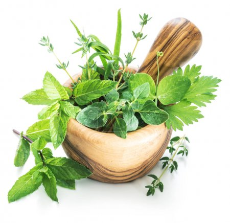 Different fresh green herbs in the wooden mortar.
