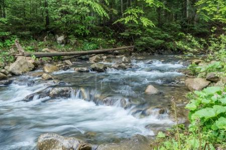 Mountain stream. Summer landscape in forest.
