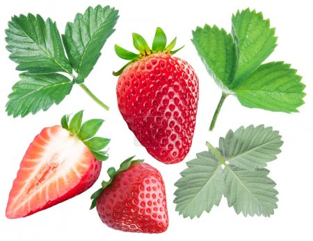 Collection of strawberries and strawberry leaves on white backgr