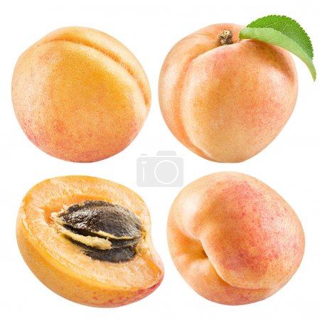Ripe apricot fruits and apricot slice. File contains four clippi