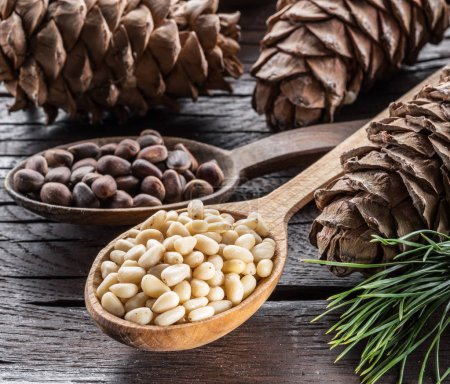 Pine nuts in the spoon and pine nut cone on the wooden table. Or