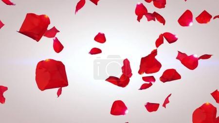Pétalos voladores de rosas rojas