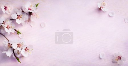 Photo for Spring background; fresh flower on blue background - Royalty Free Image