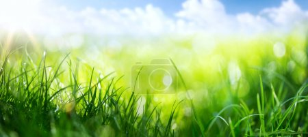 Photo for Art abstract spring background or summer background with fresh gras - Royalty Free Image