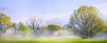 art Spring landscape; Easter background with blooming spring tre
