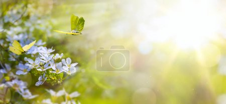 Easter spring flower background; fresh flower and yellow butterf