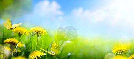 spring flower background; fresh flower on green grass backgroun