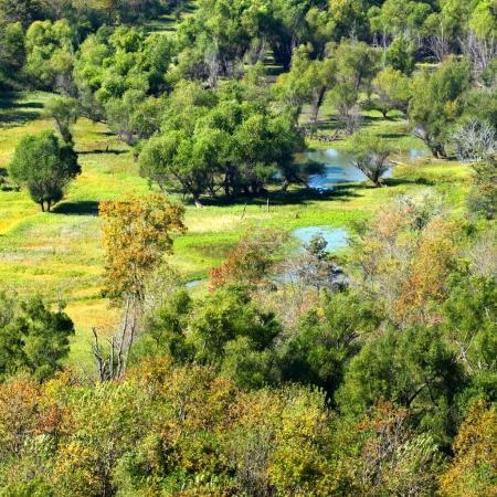 Southern Illinois Wetland Landscape