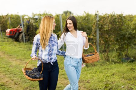 Young women in vineyard