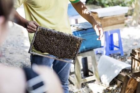 Beekeper at Mekong Delta in Vietnam
