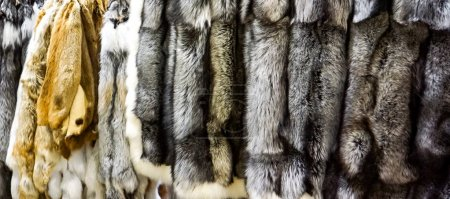 Closeup of the silver and red fox furs
