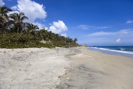 Photo pour Palmiers dans un magnifique paysage de plage des Caraïbes sauvages à Tayrona, en Colombie - image libre de droit