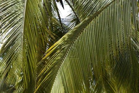 Photo pour Vue de la forêt de palmiers dans le parc national naturel de Tayrona, en Colombie - image libre de droit