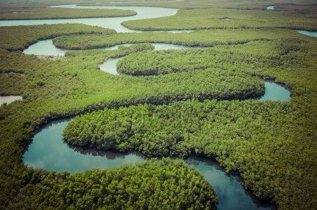 Luftaufnahme des Mangrovenwaldes in Gambia. Foto von Drohne