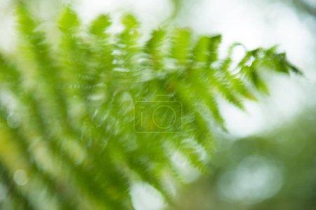 Photo pour Fond de magie nature des fougères vertes fraîches feuilles, estompée flou - image libre de droit