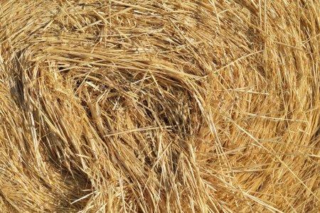 Photo pour Haystack, détail. Stack de paille . - image libre de droit