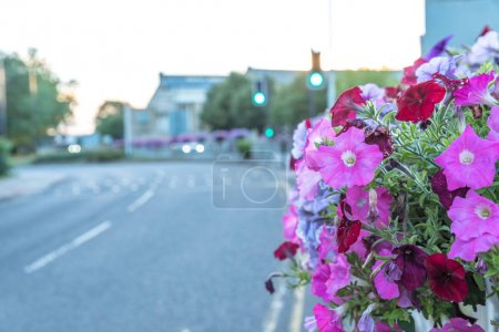 Photo for Empty city town road bordered by flowers in summer. - Royalty Free Image