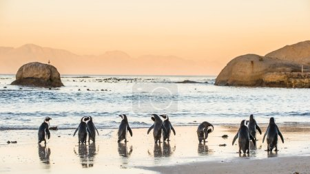 African penguins on the sandy coast