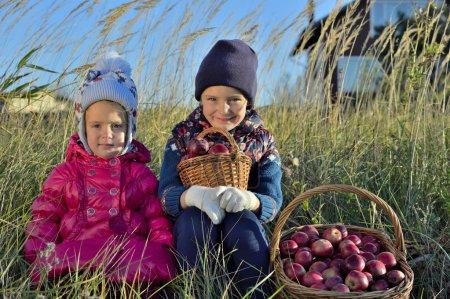 Photo pour Les enfants cueillent des pommes dans une ferme en automne. Des petites filles jouant dans un verger de pommiers. Les enfants cueillent des fruits dans un panier. Amusement extérieur pour les enfants. Une alimentation saine . - image libre de droit