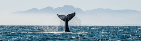 Photo for Seascape with Whale tail. The humpback whale (Megaptera novaeangliae) tail dripping with water in False Bay off the Southern Africa Coast. - Royalty Free Image