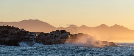 Photo for Seascape of storm morning. The colony of seals on the rocky island in the ocean. Waves breaking in spray on a stone island. Mossel bay. South Africa - Royalty Free Image