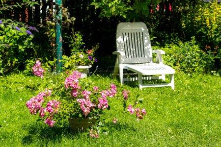 Photo pour Jardin d'été Beautifful avec des roses roses fleuries et un transat blanc . - image libre de droit