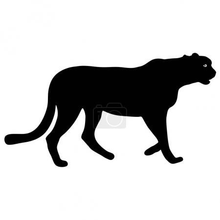 Silhouette beautiful jaguar on a