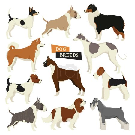Dog collection. Geometric style. Vector set of 11 dog breeds. Is