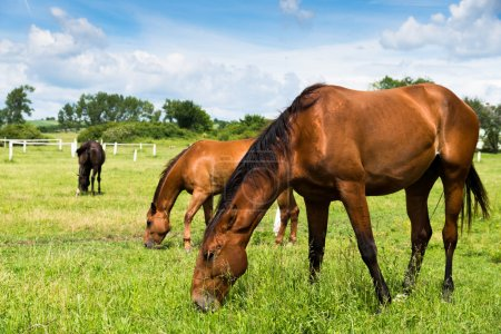 Beautiful horses in nature