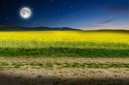 Rape field at night