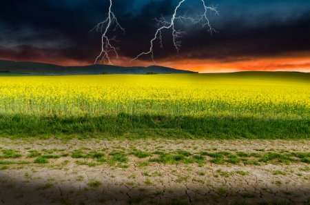 Rape field under lightnings