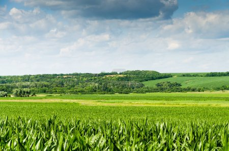 Photo for Picturesque view of fresh green field and cloudy sky - Royalty Free Image
