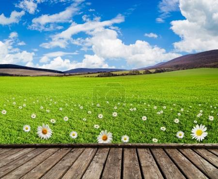 meadow with green grass and field flowers