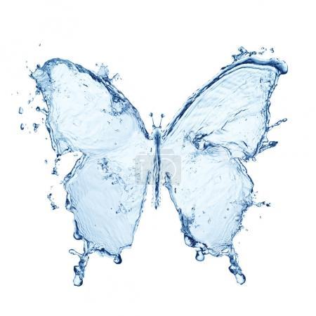 blue water butterfly