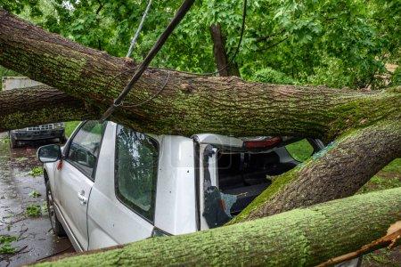 Photo pour Gigantesque arbre tombé renversé et écrasé voiture stationnée, cassé la fenêtre et endommager le câble électrique à la suite des vents ouragan sévère dans l'une des cours de Moscou - image libre de droit