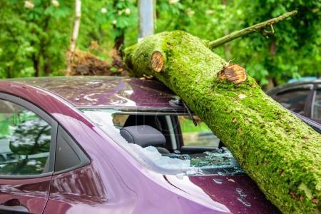 Photo pour Gigantesque arbre tombé couvert de mousse écrasé voiture pourpre garée, cassé la fenêtre et l'antenne à la suite des vents ouragan sévère dans l'une des cours de Moscou - image libre de droit