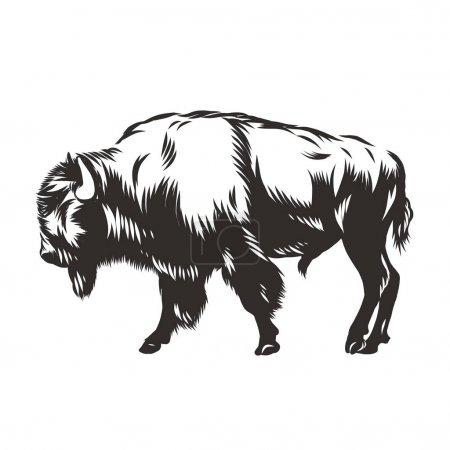 Illustration pour Buffle, bison, vecteur, nature américaine illustration taureau animal blanc noir - image libre de droit