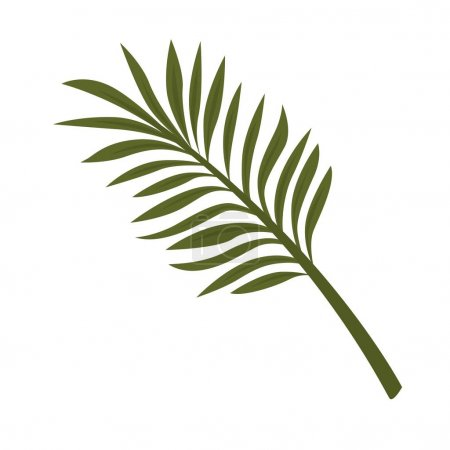 Illustration for Fern leaf isolated on white background. Tropical plant fernleaf hedge bamboo branch realistic vector illustration. Pot plant widely used in home decor, big leaves used in flower bouquets composition - Royalty Free Image