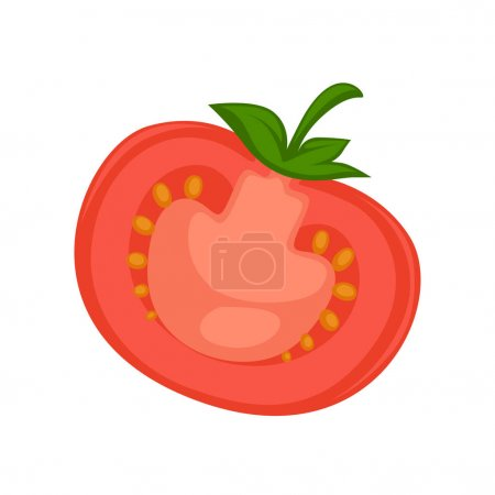 Vector illustration of the half of red ripe tomato isolated on white.