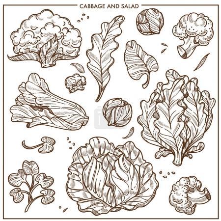 Illustration pour Salade laitue et choux légumes croquis icônes. Vecteur isolé chou-fleur blanc ou chou brocoli, feuille de salade iceberg et feuille de chêne ou d'oseille, épinards et cresson cole et chou frisé légumes - image libre de droit