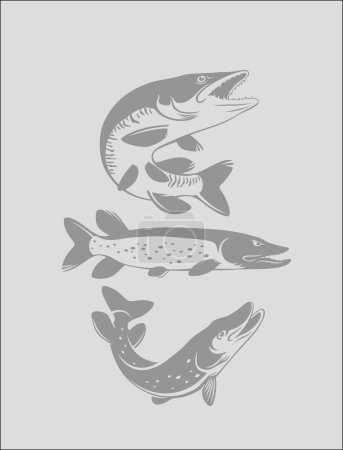 set of three pike fish icons