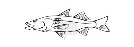 Drawing of fish for logo